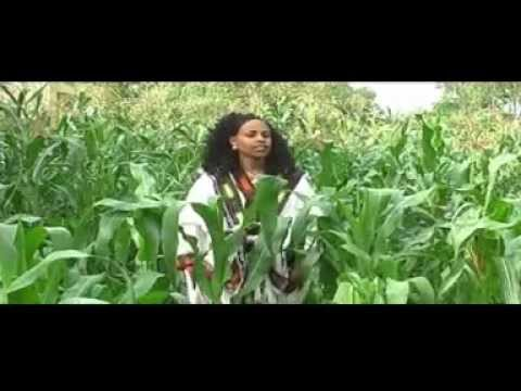 New Ethiopian Tigrigna Music