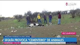 #ElTiempoCHV | El centro-norte de Chile vive la peor sequía en su historia ☀