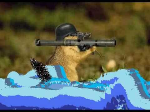 The short Beaver war