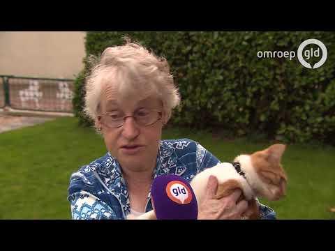 17 katten vermist wamel