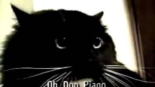 Смешные звуки кошек