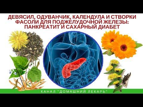 Девясил, одуванчик и створки фасоли при панкреатите и диабете - Домашний лекарь - выпуск №244