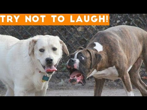 Try Not To Laugh At This Ultimate Funny Dog Video Compilatio