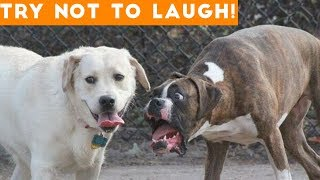 Try Not To Laugh At This Ultimate Funny Dog Video Compilation  Funny Pet Videos