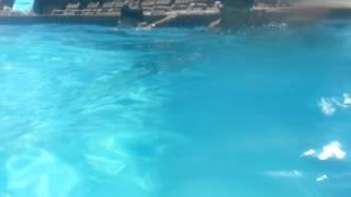 akhil arjun swimming 1