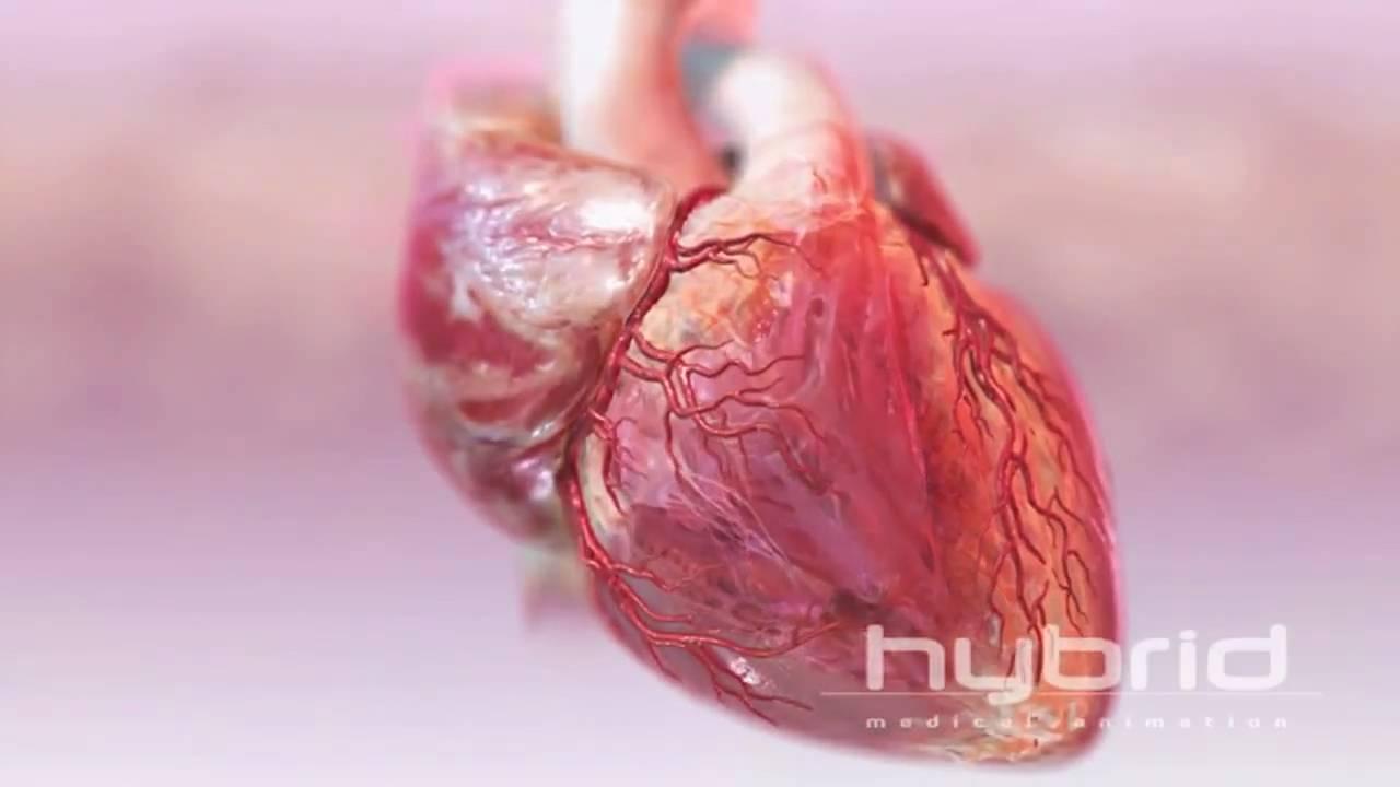širdies sveikatos patvirtinimai youtube