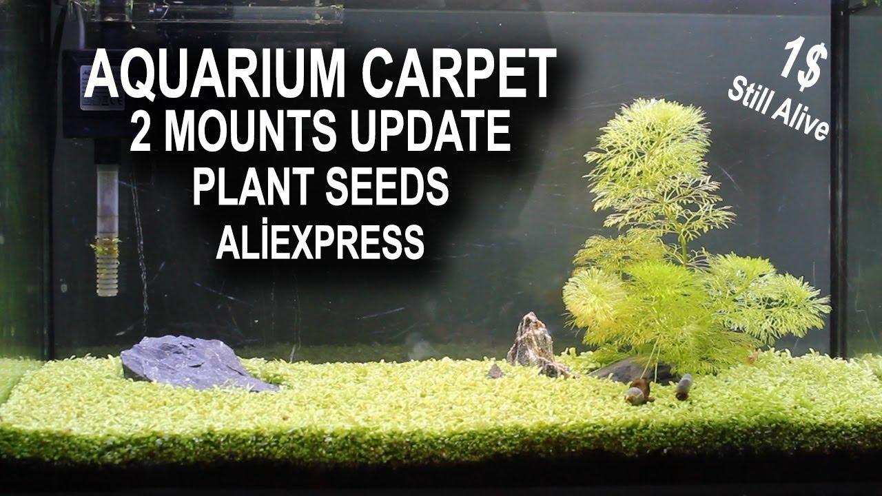 AQUARIUM CARPET 2 MOUNTS UPDATE - Aliexpress Plant seeds