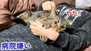 病院に行くのが嫌すぎて飼い主に激しい攻撃をしてしまった猫w