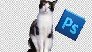 Как добавить кошек, собак и другие изображения на фото