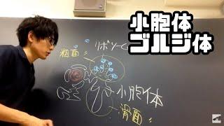 高校 生物 小胞体とゴルジ体  字幕あり