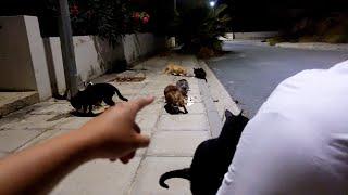 Hund wird von Katze angegriffen 😱! Fütterung geht weiter!