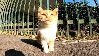 【野良子猫】気になるけどやっぱ怖い。ちょっとビビりの子猫がカワイイ