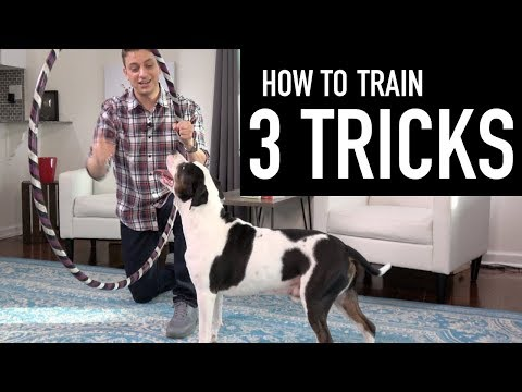 How to Train your Dog 3 Tricks! (Jump through a hoop, hugs, and more!)