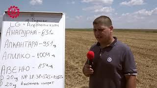 LG АПИЛКО – висок добив, високо качество на зърното