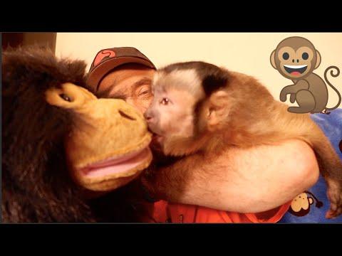 Monkey Meets a Monkey Puppet! SUPER CUTE