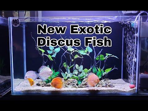 New Exotic Discus Fish...UNBOXING !!!