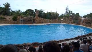 Delfiini Show - Dolphins, Loro Parque, Tenerife