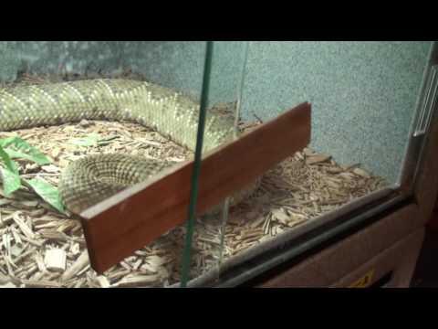 Rhino viper and Water Cobra Tub Maintenance
