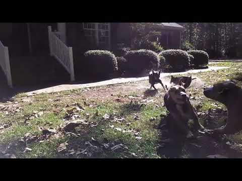 Here's Teddy in slow mo out running with his buddies!