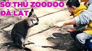 Lên Đà Lạt đi thử sở thú Zoodoo như thế nào