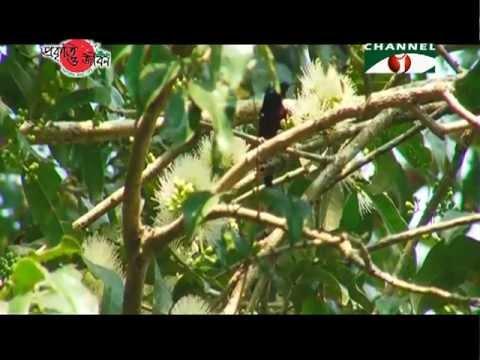 Nature and Life  Episode 122 (Tailorbird and Sunbird)