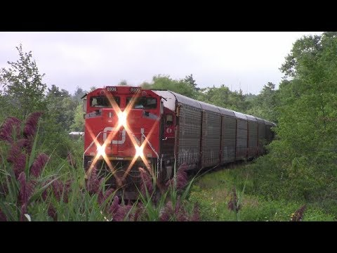 CN Train 407 Through the Vegetation at Waverley, NS (Aug 16, 2017)