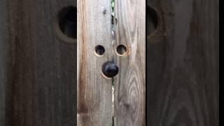 Собака на шухере