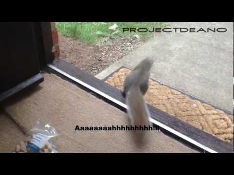 ProjectDeano - Talking Squirrel! Stealing Monkey Nuts! Funny animal! Funny Talking animal!