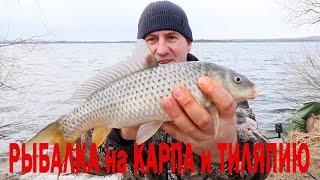 Рыбалка на КАРПА и ТИЛАПИЮ ранней весной