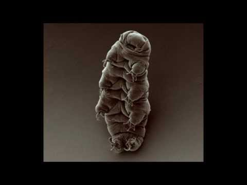 Facts: The Water Bear (Tardigrades)