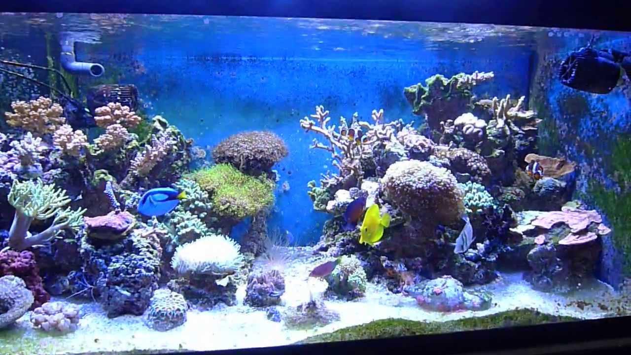 Akvaserviss reef aquarium 400 l youtube for Aquarium einrichtungsideen