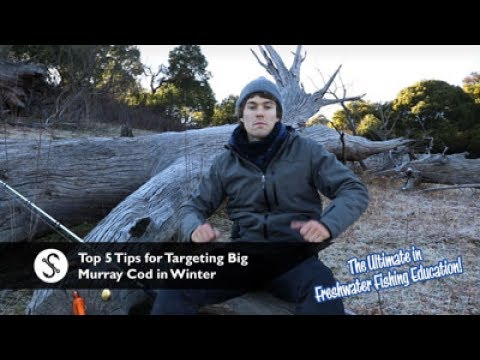 Top 5 Tips For Targeting Big Murray Cod In Winter