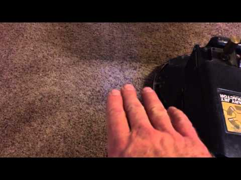 carpet-cleaning-business:-ambient-dog-odor!