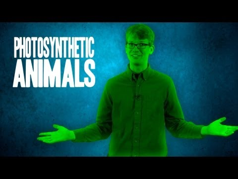 3 Amazing Photosynthetic Animals