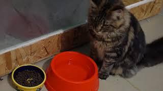 А ваша кошка замачивает еду? Пишите в комментах