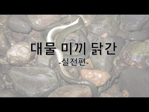 장어 낚시 기초 강좌 3편- 닭간 대물 미끼 (실�