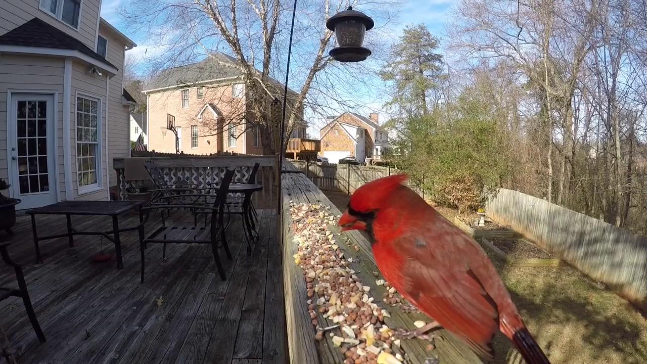 Backyard Birds-North Carolina - YouTube