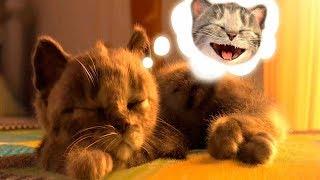 Милый котенок бантик идет в школу | Трюки наоборот | Играем с котиком игре для детей