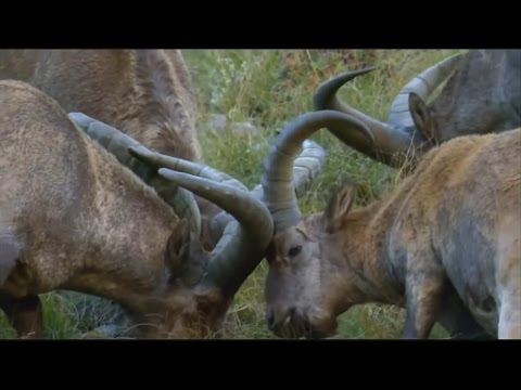Wild Russia: The Caucasus (Der Kaukasus) - National Geographic Documentary HD