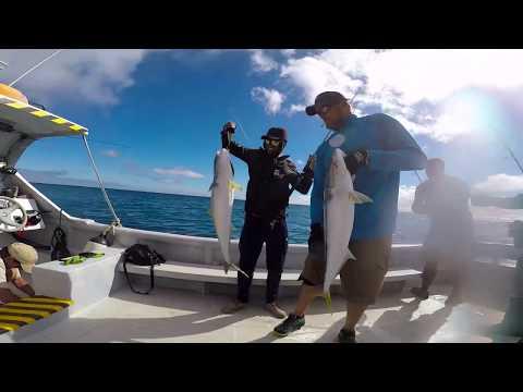 Pesca de Vidriolas, Isla Robinson Crusoe/ Yellowtail Kingfish fishing in jigging & popping/ Spinrock