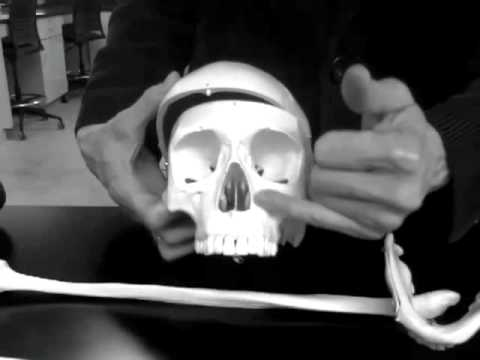 BONE MANIA part 3 of 3 lab practical explained Anatomy and Physiology 2012