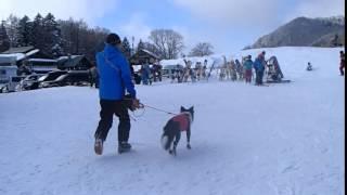 2016年1月31日 再びモモタロさんを連れてYAMABOKUスキー場へ。今回は雪...