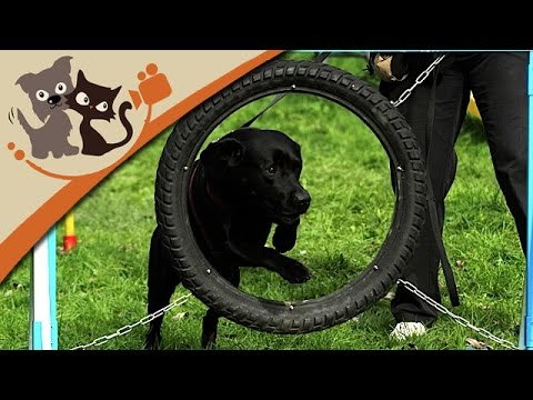 Agility - Hundetraining für Sportskanonen