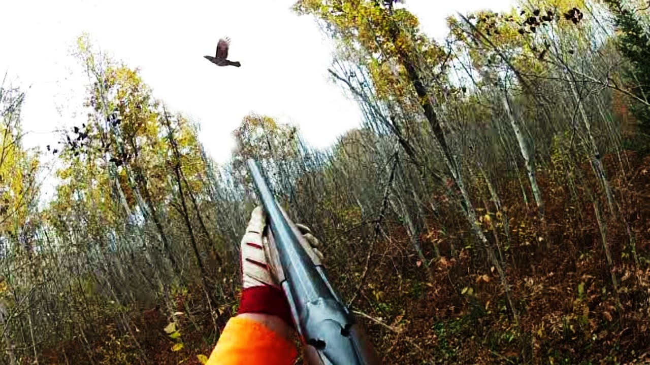 Best Dog For Hunting Ruffed Grouse