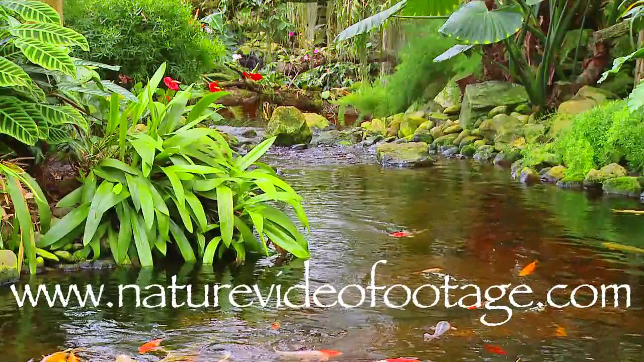 Tropical indoor garden with koi fish nature video footage0004 tropical indoor garden with koi fish nature video footage0004 youtube workwithnaturefo