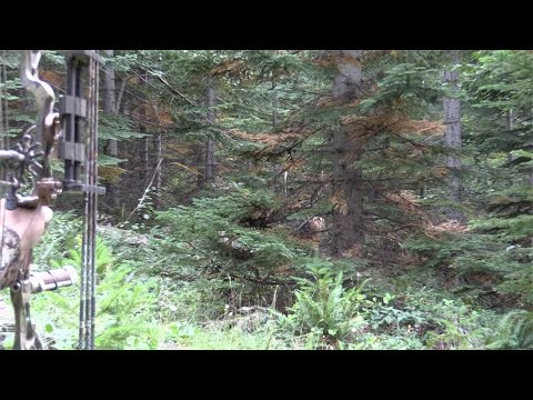 Roosevelt Elk Hunting, Archery Point Blank Bulls, Washington State S3Ep8