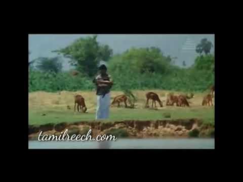 Tamil whatapp love song naan erikara melirunthu best song