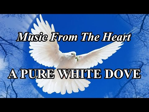 A Pure White Dove (108...