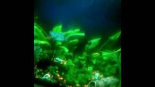 Рыбки плавают в аквариуме все они красавицыироврТм