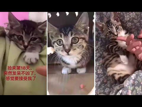 当你捡到一只狸花猫......when you adopt a Chinese Li Hua cat